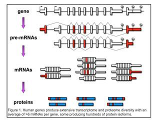 Alternative Splicing and its Significance