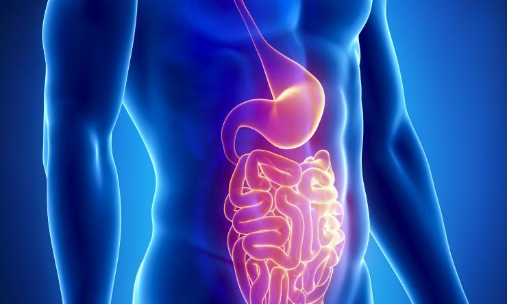 Abdomen, stomach and small intestines